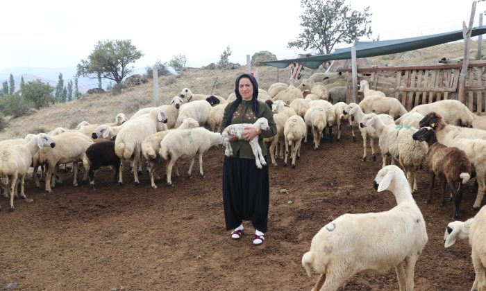 Aksaray'da hibe destekli projelerle tarım ve hayvancılık hızla gelişiyor