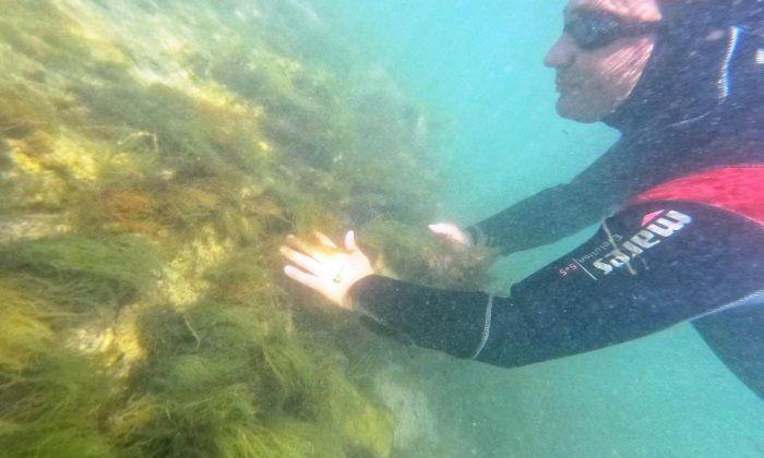 Başkan Dr. Metin Oral, dalış yapıp arkeolojik çalışmaları gözlemledi: