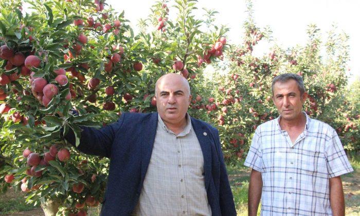 Dalında 1,5 liraya alıcı bekleyen elma, kentteki zincir marketlerde 3-4 katına satılıyor