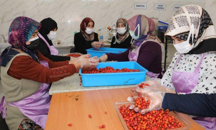 Kadınlar hem üretiyor hem de bütçelerine katkı sağlıyor