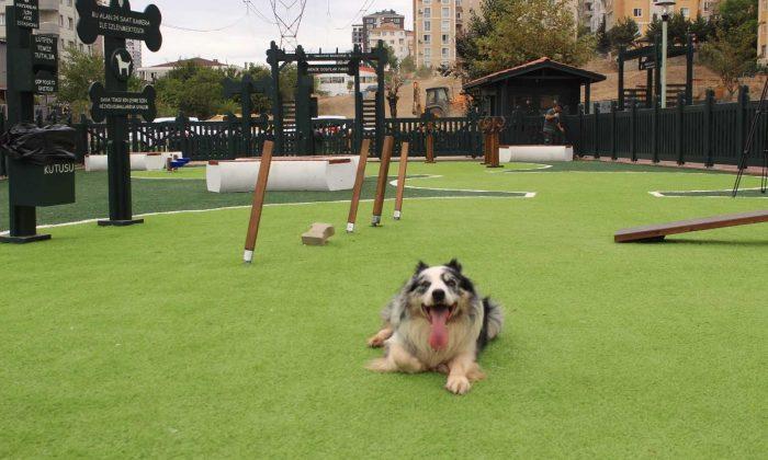 'Minik Dostlar' hayvan parkı Ümraniye'de açıldı