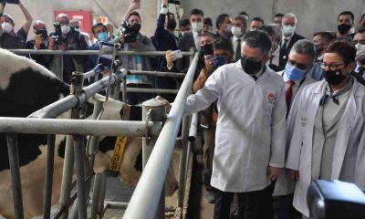 Pakdemirli: Elektronik Takip Sistemi hayvancılığa katkı sağlayacak